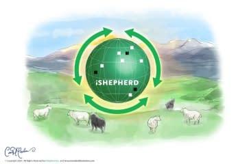 iShepherd Digital Watercolor Sheep in Highlands