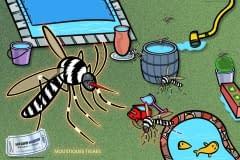 La Lutte contre les moustiques tigres